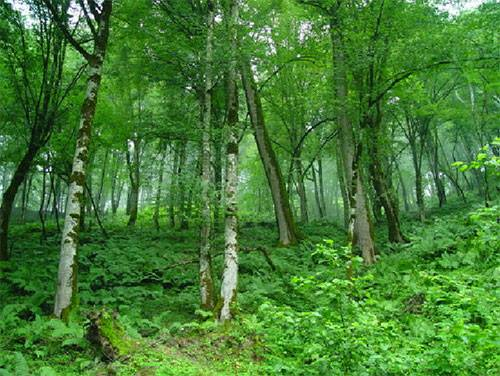 déforestation iran 4