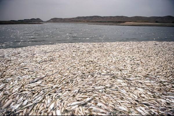 sardines iran